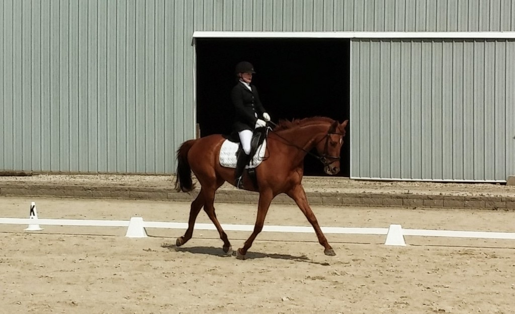 It took a few years to get this trot and this carriage and this musculature. He's almost unrecognizable from his before pictures. For us, this was a huge accomplishment, although other riders start with horses that look like this from almost the beginning. To each their own!