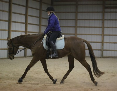 The Trick to Stretchy Trot and Topline Building