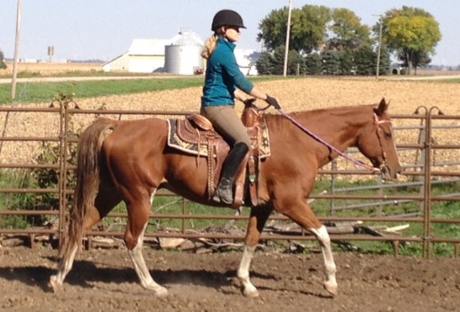 Dressage with Off-Breeds: The Failure Trap to Avoid