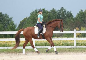 thoroughbred cantering pretty
