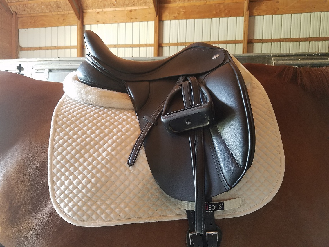 dressage saddle and pads on horse