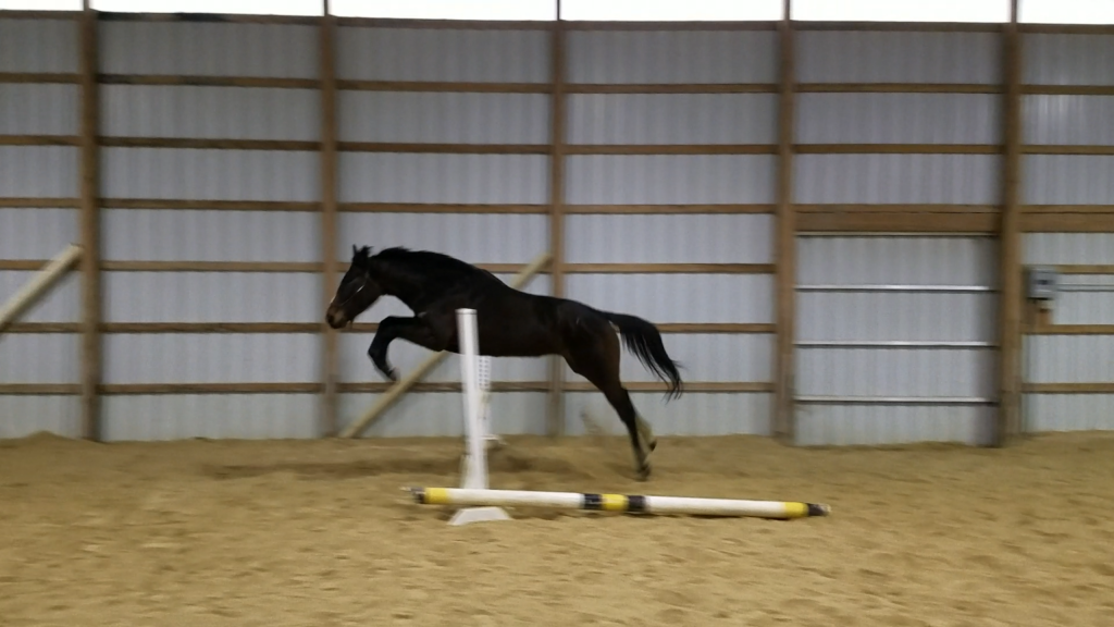 Rosie free jumping