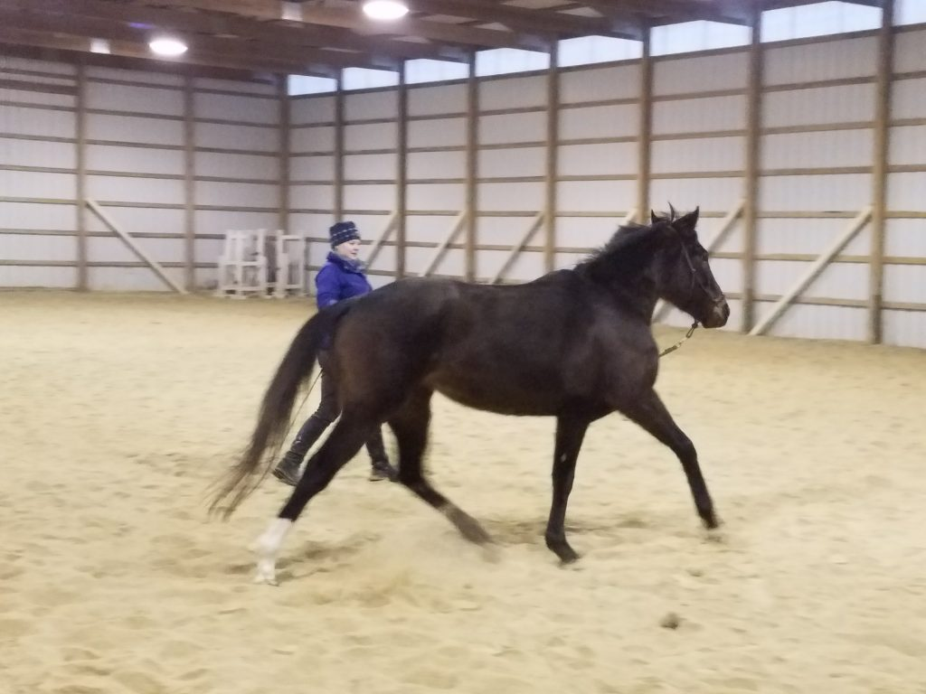 Lunging Rosie over the winter