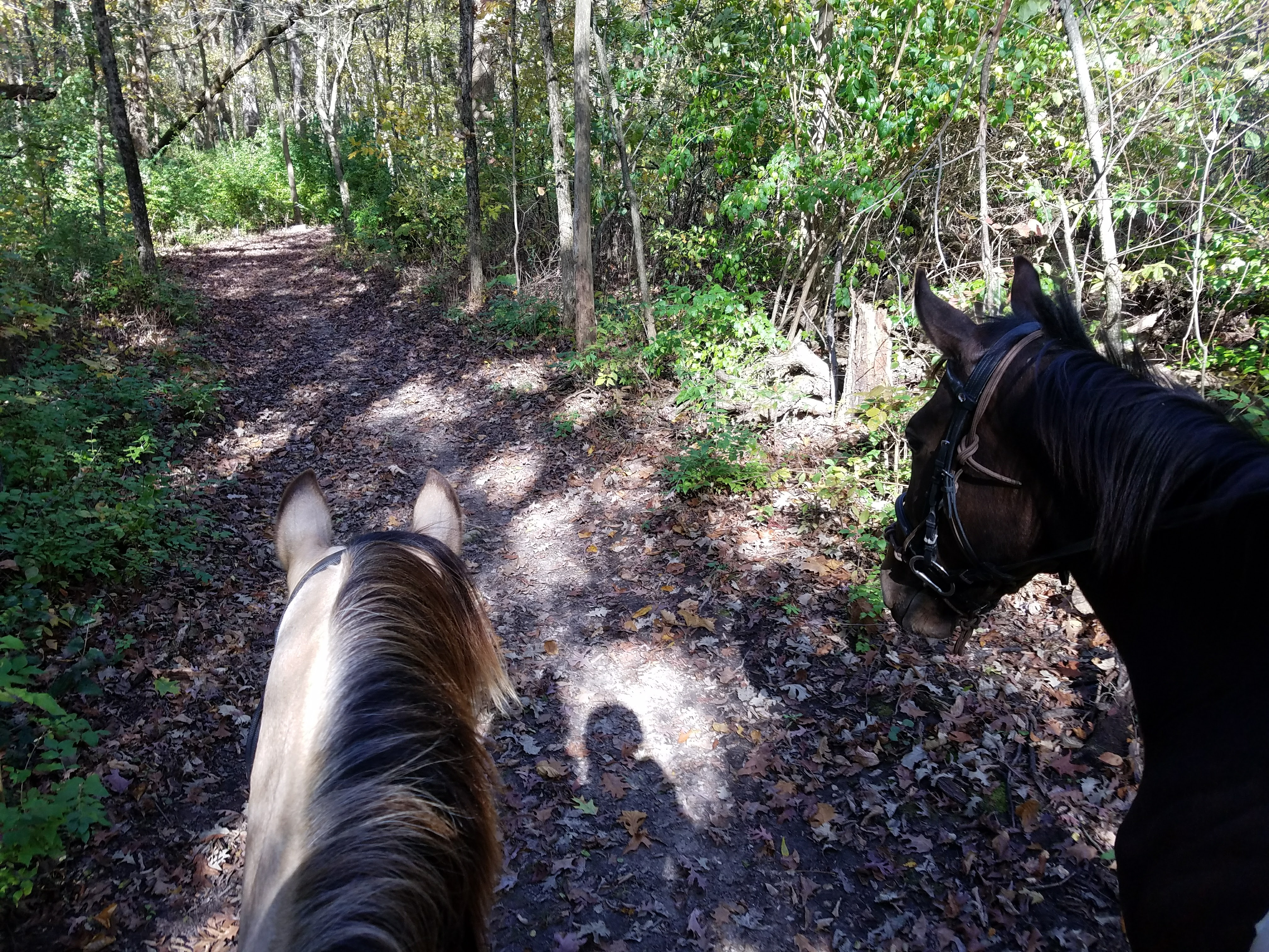 Sofie and Rose on the trail last fall