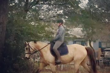 dressage horse trotting with rider