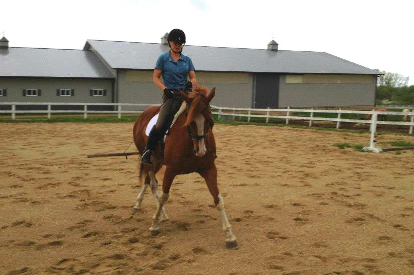horse leg yielding