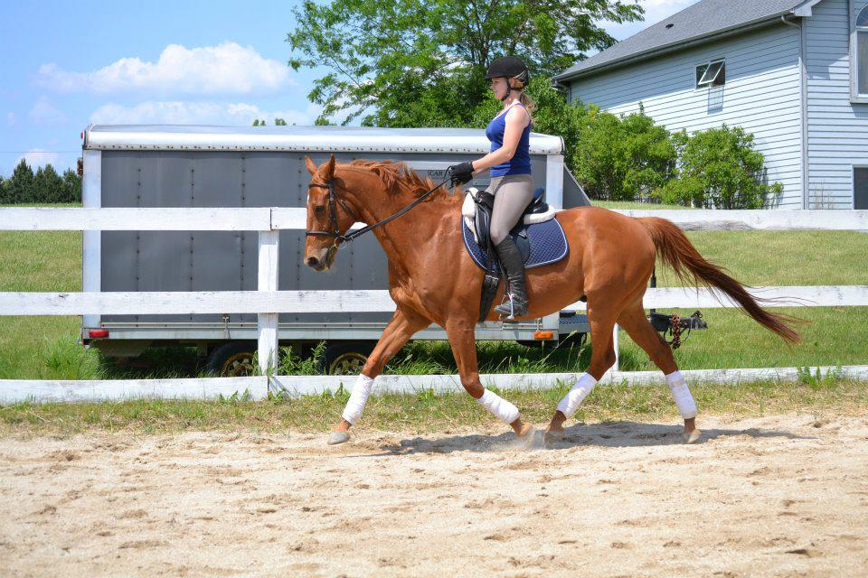 Horse moving correctly and engaged behind in the trot.